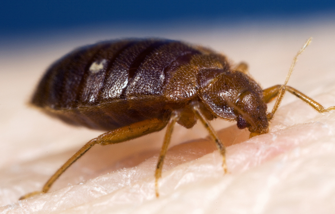Best Bed Bug Exterminator Long Island