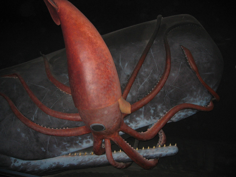 The real-life origins of the legendary Kraken | Amy ...