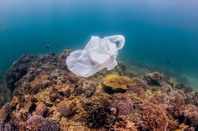 Pollution is one of the problems affecting scuba diving. Shutterstock