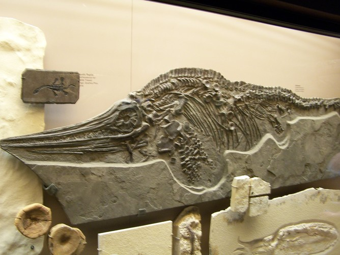 the history and extinction of the ichthyosaur Slower evolution and climate change drove ichthyosaurs to extinction however, their evolution was much slower than earlier in their history additionally an international team of scientists have revealed a new species of ichthyosaur.