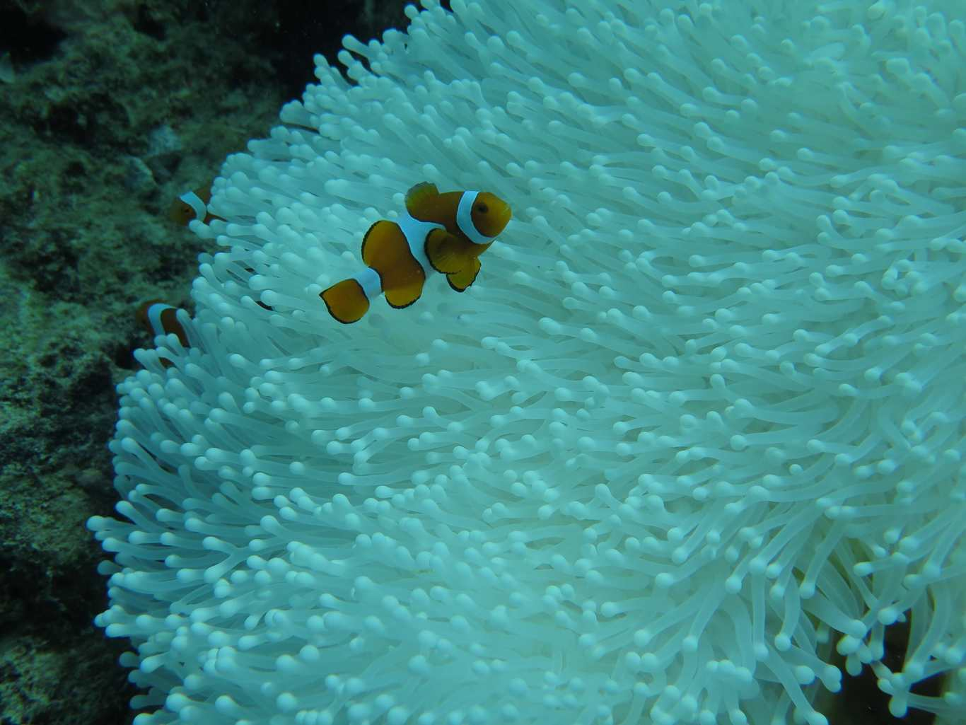 coral bleaching Coral bleaching and ocean acidification threaten to cause serious disruption to marine food webs.