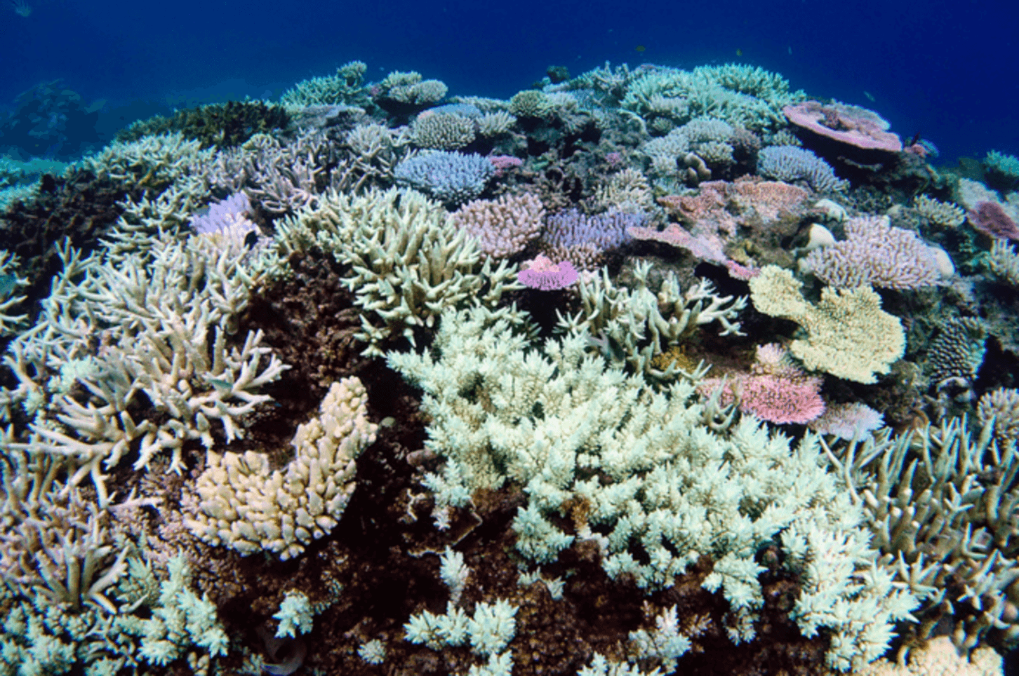 http://theconversation.com/great-barrier-reef-bleaching-stats-are-bad-enough-without-media-misreporting-58283