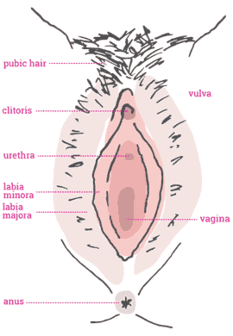 of labia and vulva Picture