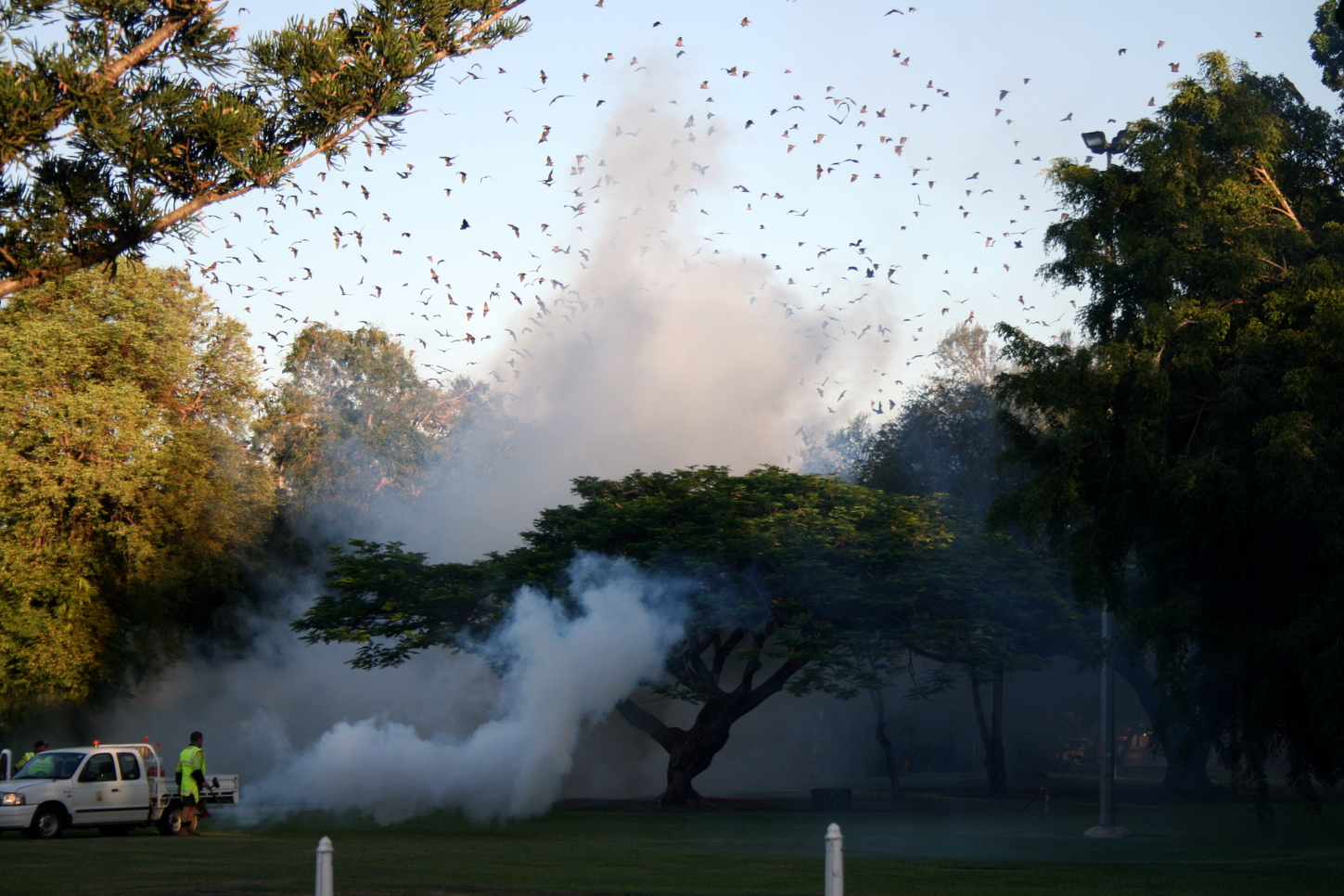 Not in my backyard? How to live alongside flying-foxes in ...