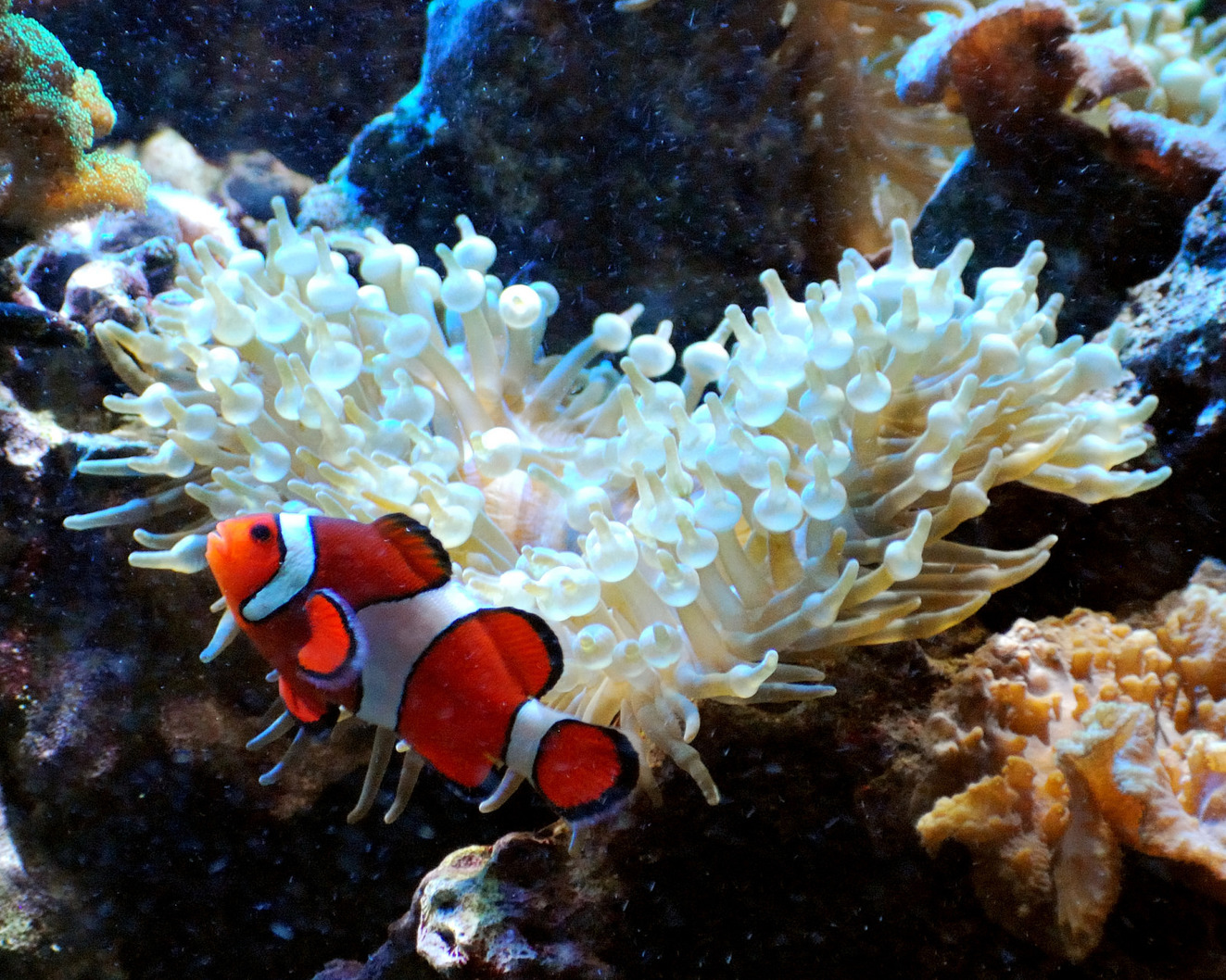 Finding nemo and dory is easy deciding whether they for Ornamental fish