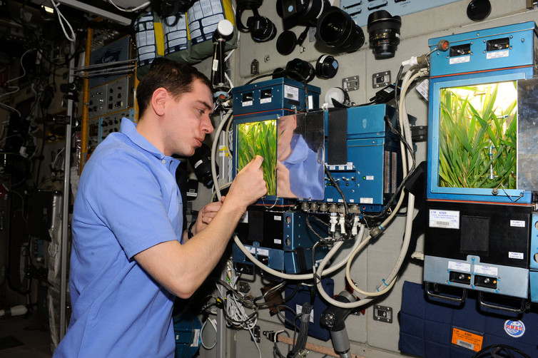 Gardening In Space (theconversation.com)
