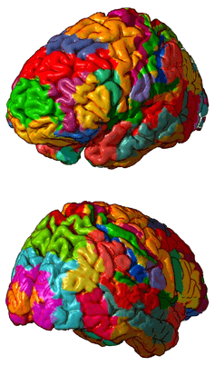 ​ Until now, Brodmann's version was the widely accepted map of brain regions.