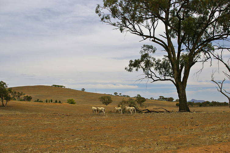 By the time you know it's arrived, a drought can already be doing damage. Photo: Bidgee/Wikimedia Commons