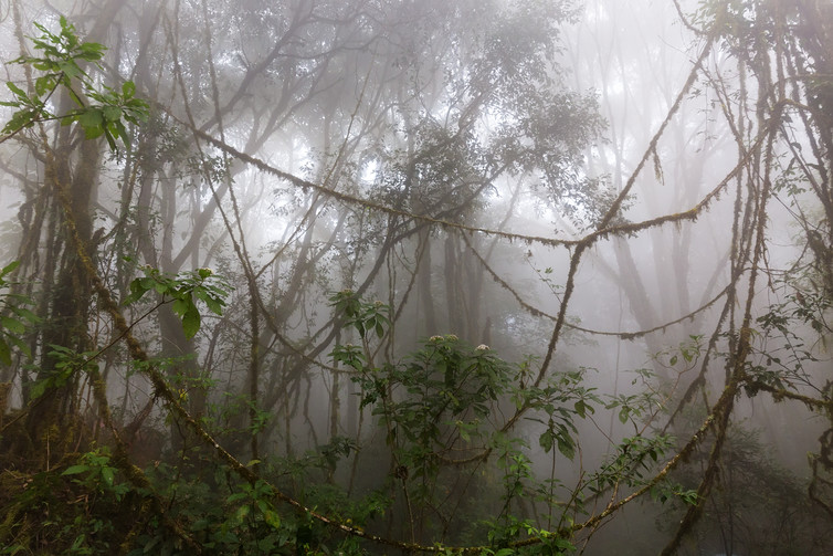 fog in forest with lianas