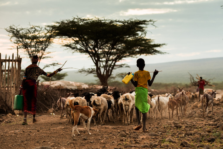 Goats and sheep in Africa