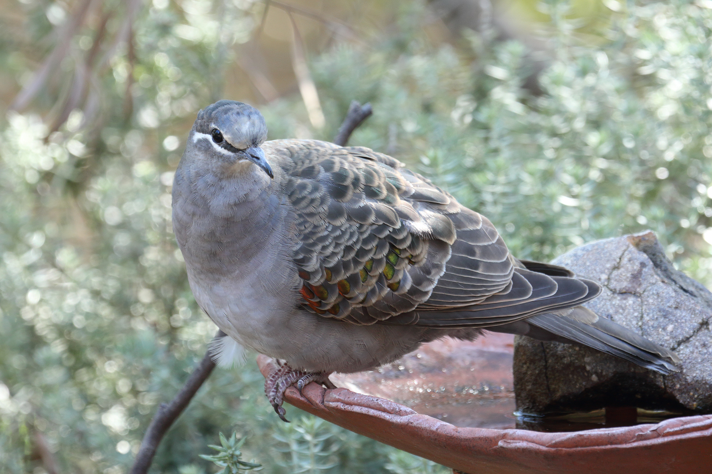 how to attract your favourite birds to your garden australian