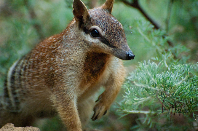 It's not surprising Australians want to protect endangered species ...