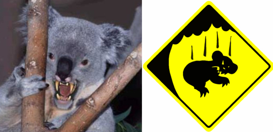 can u0026 39 t bear  u0026 39 em  how gps is helping to track drop bears