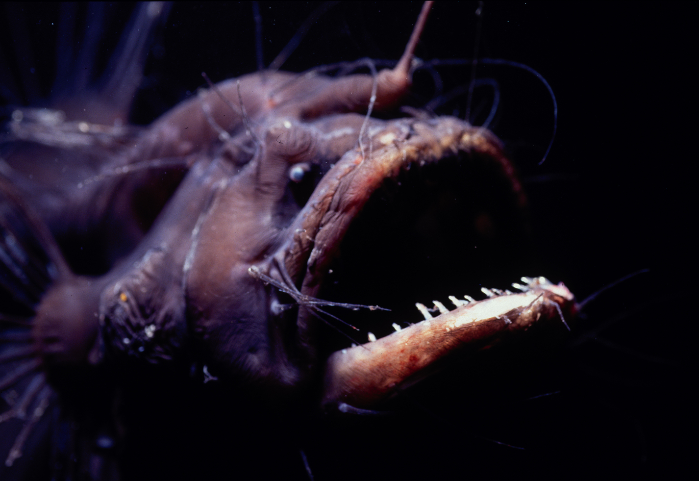 Final frontiers the deep sea for Deep sea fishes