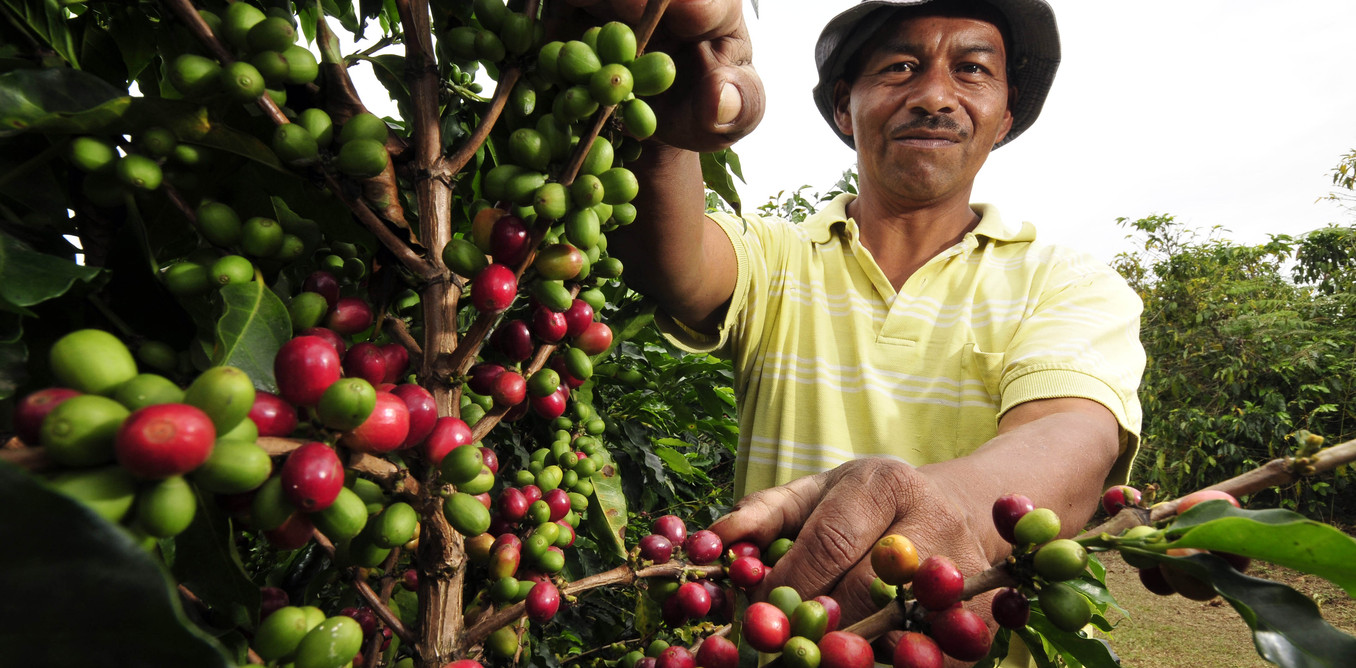 Climate Change Is Causing Havoc For Global Coffee Yields