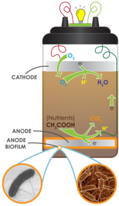 bacteria and d energy e Can efficiently convert solar energy and recycle carbon dioxide into lipids  in  addition, non-oleaginous bacteria, like e coli, can be transformed into valuable   röttig a, wenning l, bröker d, steinbüchel a (2010) fatty acid alkyl esters:.