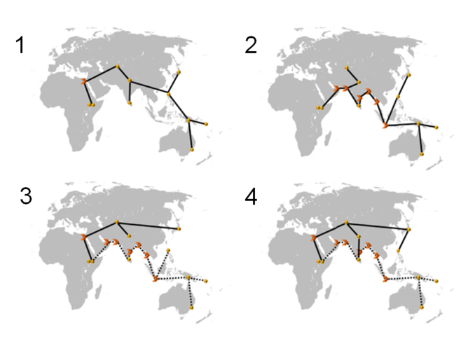 cientists used mathematical modelling to explain the genetics as well as the skull shapes observed across many Asian and Australasian populations. This involved testing several alternate histories to see which one is best able to explain the modern situation. Each model must be simple enough to understand, and between them, they must cover the likely possibilities. Courtesy of Reyes-Centeno/PNAS 2014
