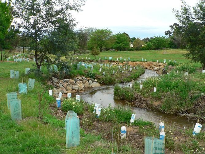 Streamside restoration – in this case an urban landcare project in Beechworth – is a common activity for Landcare now, and is likely to be done by the Green Army in future. Photo: Andrew Campbell