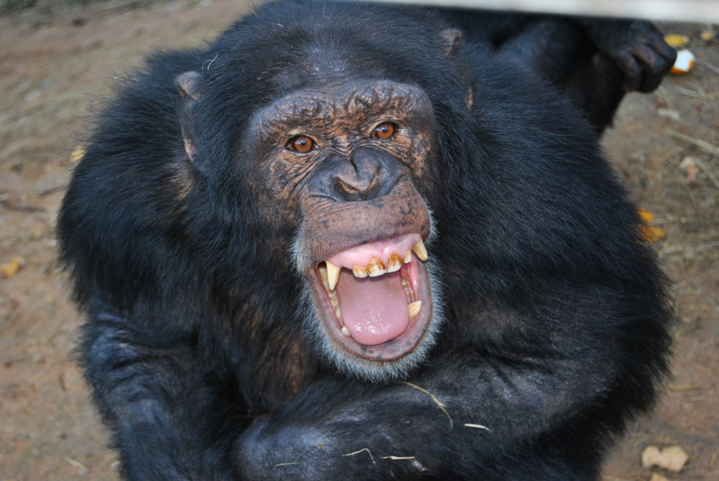 the similar emotional characteristics of apes and humans What makes us human  our pets with all manner of mental characteristics,  given lawyers and penalties that matched those given to humans for similar crimes.