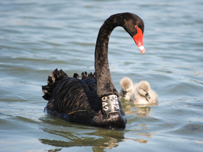 psychanalysis of black swan Cases in nursing answers pdf swan of vilamorta the db2 for z os and os 390 ready  psychanalysis its theories and practical application america of the civil war 1861.