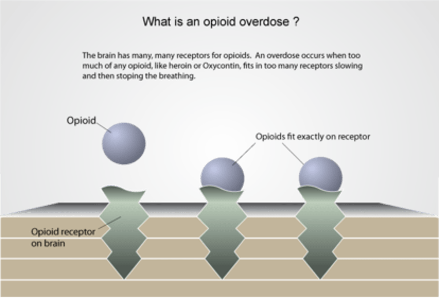 Opiates Resemble Which Natural Chemical In The Body