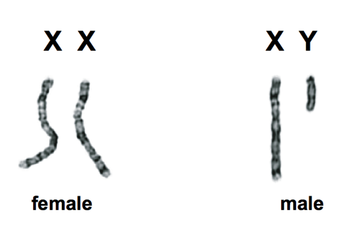 What Is Sex Male And Female
