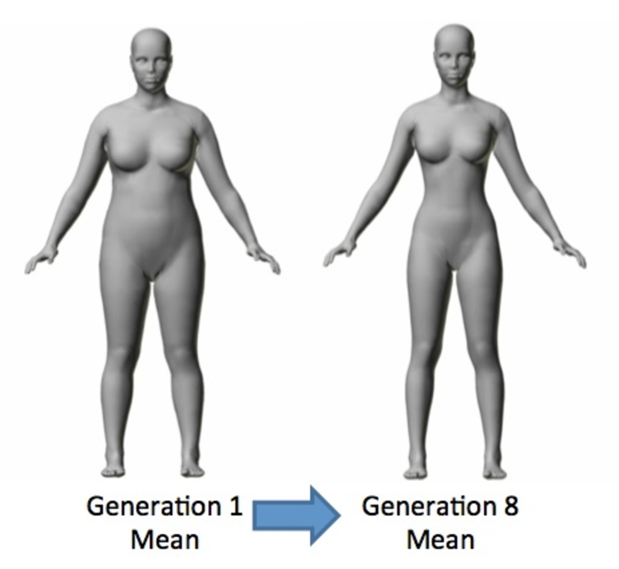 type women body Average