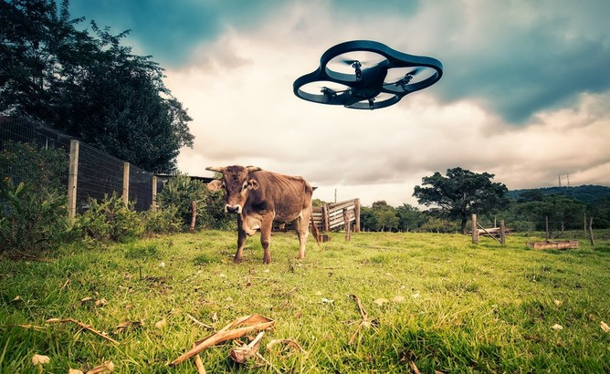 Picture of cow in pasture with drone hovering