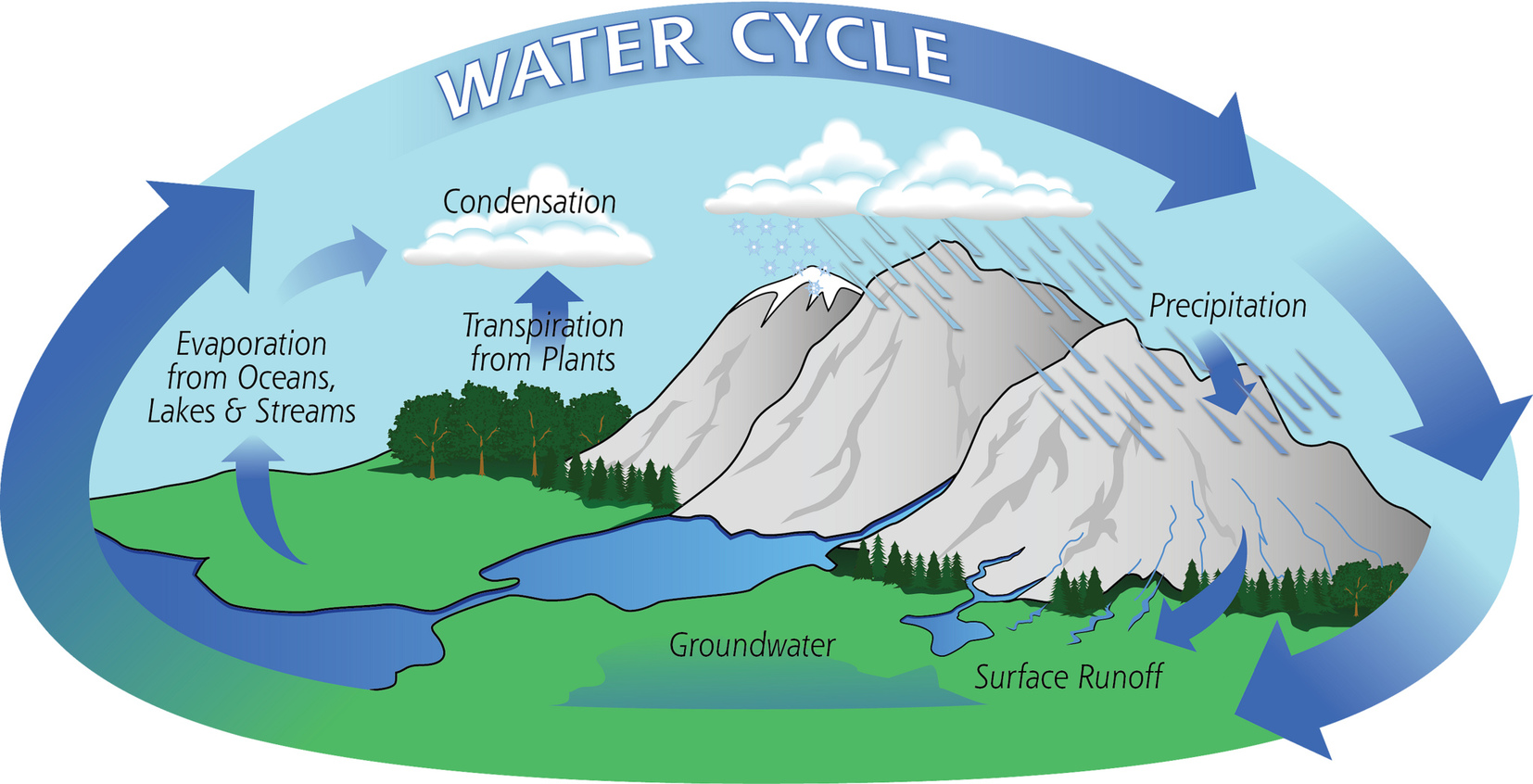 dynamic water cycle dynamic printable water cycle water co2 levels and forest water cycle waldwissen net source