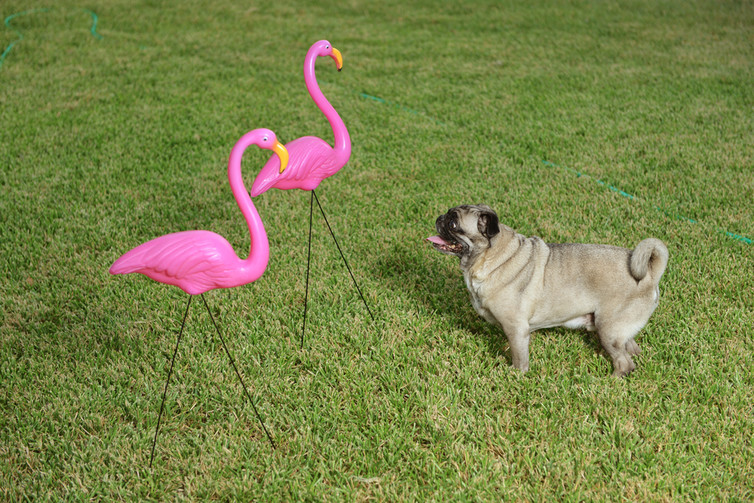 jennifer price the plastic pink flamingo a natural history ap Donald featherstone, the creator of the iconic pink plastic flamingo that has decorated lawns for decades, died monday he was 79.