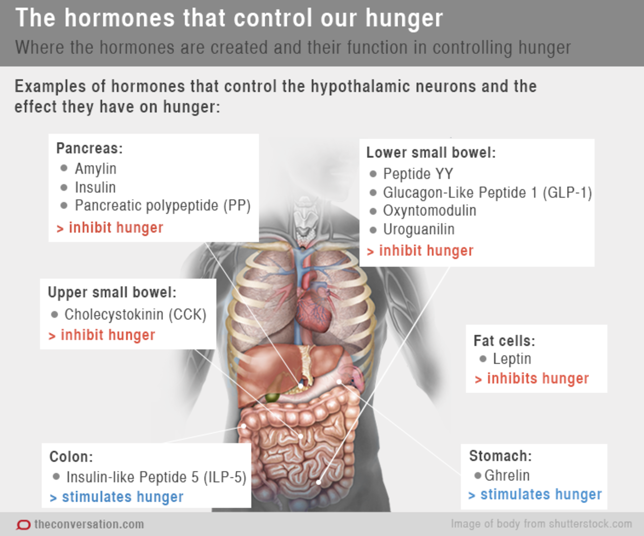 Are Hormones Making Us Feel Hungry And Full  Sbs News-9413