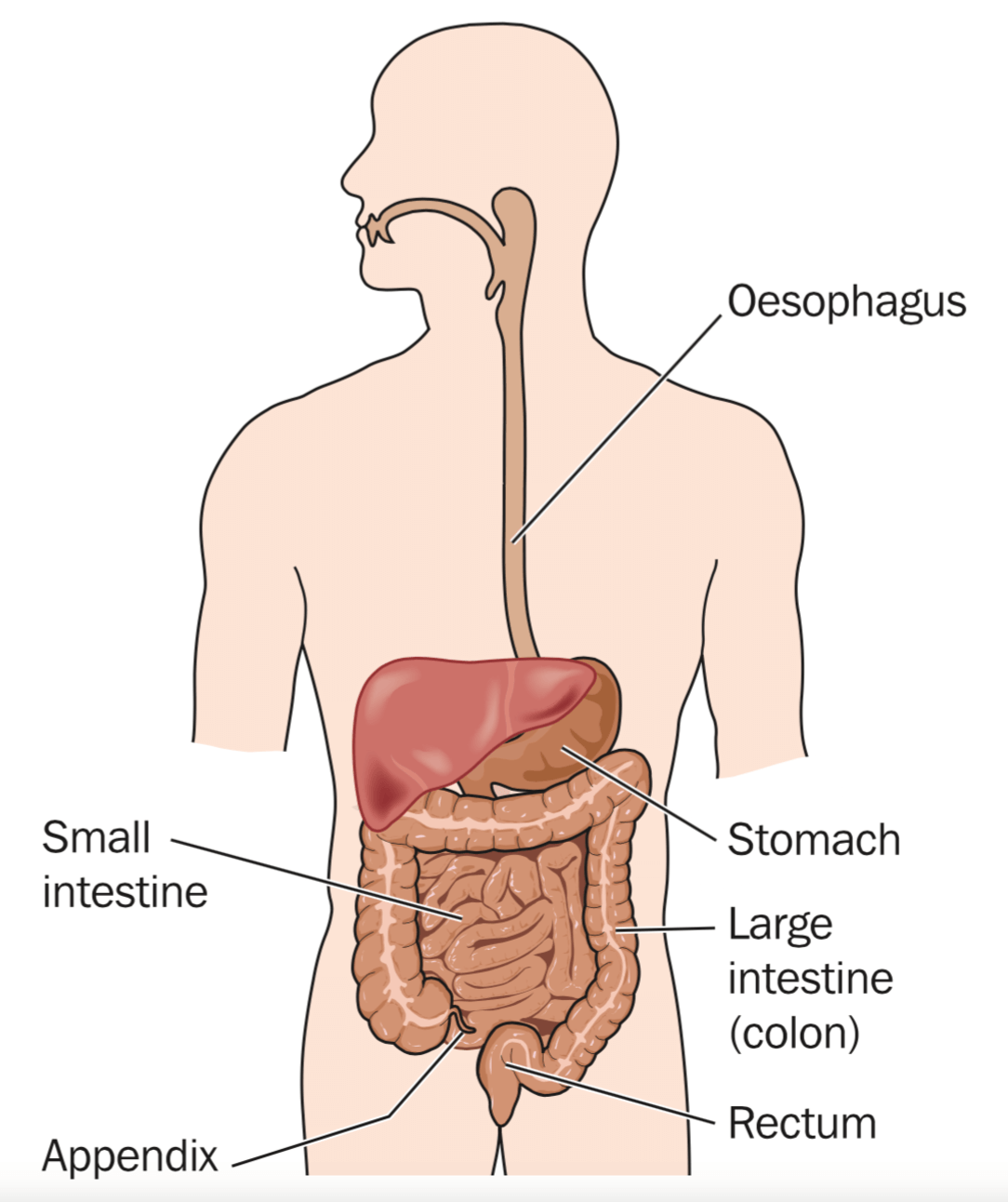 So You Think You Have Ibs Coeliac Disease Or Crohns Heres What