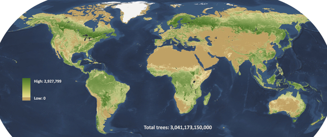 Three trillion trees, mapped to the square kilometre. Credit: Crowther et al / Nature
