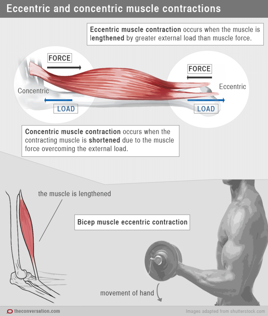 ECU | Why do my muscles ache the day after exercise? : News and ...